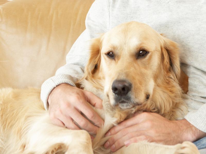 Anziani: un animale domestico abbassa il rischio di malattie cardiovascolari?